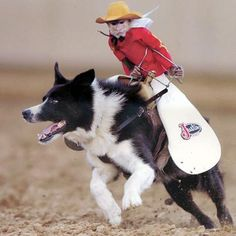 257 Best Rodeo Cowboys Amp Horses Images On Pinterest