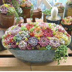 I'd be on cloud nine receiving this huge pot of rare Succulents! Succulents In Containers, Cacti And Succulents, Planting Succulents, Planting Flowers, Succulent Gardening, Succulent Pots, Garden Pots, Succulent Centerpieces, Succulent Arrangements