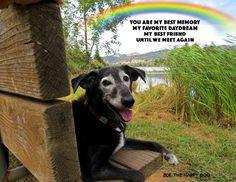"""You are my best memory....""  -  puppy on bench near Rainbow Bridge."
