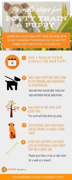 Dog Training - CLICK THE IMAGE for Lots of Dog Care and Training Ideas. #dogtraining #dogtrainingtips
