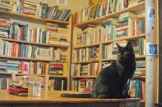 """Val-kyttie on the table."" Val-kyttie is the ""store manager"" at Tales of the Lonesome Pine (described in ""The Little Bookstore of Big Stone Gap"" [Virginia]), which is a bookstore cum cat rescue. -- Click through for a very, very funny/punny read for literature or cat lovers, ""I Know Why the Cat Toy Sings."""