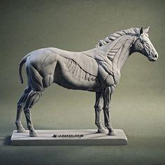 rework one of horse head model Elephant Anatomy, Horse Anatomy, Animal Anatomy, Foot Anatomy, Horse Drawings, Cartoon Drawings, Animal Drawings, Horse Skull, Horse Art