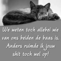 spreuken over katten 40 Best Spreuken images | Messages, Quotes, Thinking about you spreuken over katten