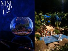 Nightime tennis match terrarium. Never thought those words would go together!