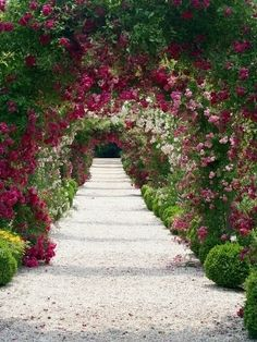 Gotta love a rose tunnel.  This one is subtle, colorful and creative.