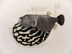 Lost at Sea | jewelry inspired by the sea life drawings of Keiga Kawahara