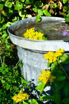 diy bird baths