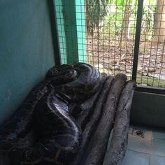 Explore the animal world at Crocolandia in Biasong, Talisay City, Cebu, Philippines. Managed by the Crocolandia Foundation, Inc. Crocodiles, Places Of Interest, Cebu, Python, Philippines, Marvel, Crocodile, Cebu City, Men's Fitness Tips