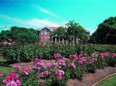 Mississippi Hattiesburg USM Rose Garden by visitmississippi, via Flickr