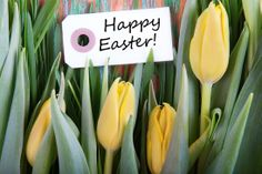 Wishing you God's richest blessings as you and your family celebrate the resurrection of our Lord Jesus Christ. Lillian Penner, Prayer Coordinator, Christian Grandparenting Network