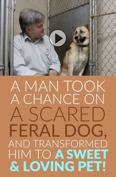 A Man Took A Chance On A Scared Feral Dog And Transformed Him To A Sweet Loving Pet! :)