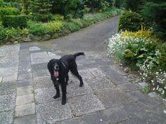 My dog in the Garden by on DeviantArt Coffee Table Books, Deviantart, Garden, Dogs, Animals, Garten, Animales, Animaux, Lawn And Garden
