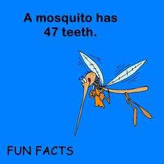 Interesting! It seems like a mosquito gets good use out of those 47 teeth, too.   www.sallingtate.com