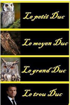 Le #petit duc , le #moyen duc , le #grand duc et le #trou duc !!! #blague #drôle #drole #humour #mdr #lol #vdm #rire #rigolo #rigolade #rigole #rigoler #blagues #humours #france #français #française