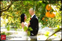In the orange trees:  Photo by Jason Angelini Photography