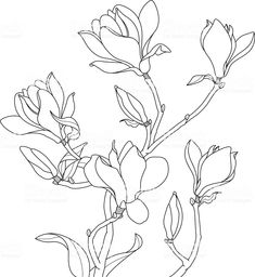 View top-quality illustrations of Magnolia Blossoms Drawing. Find premium, high-resolution illustrative art at Getty Images. Fabric Painting, Painting & Drawing, Japanese Magnolia, Illustration Blume, Floral Drawing, Magnolia Flower, Free Vector Art, Art Tutorials, Line Art