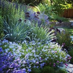 A beautiful mixed planting of perrenial edible and pollintor attracting plants! Can you spot the edibles? (hint: artichoke, lavender calamintha) Star Apple Edible Gardens.