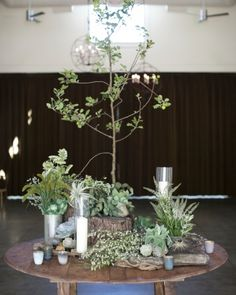 An heirloom apple tree with exposed roots was the focal point of a round table set between the areas used for dinner and for dancing.