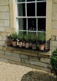 Window box with potted lavender