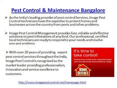 Pest Control Services Bangalore by Imagepest Control