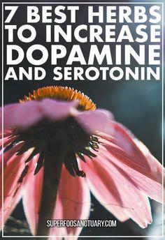 Top 7 Herbs to Increase Dopamine and Serotonin - Superfood Sanctuary - Heal through Food Healing Herbs, Medicinal Herbs, Natural Healing, Holistic Healing, Natural Health Remedies, Herbal Remedies, Cold Remedies, Health Benefits, Health Tips