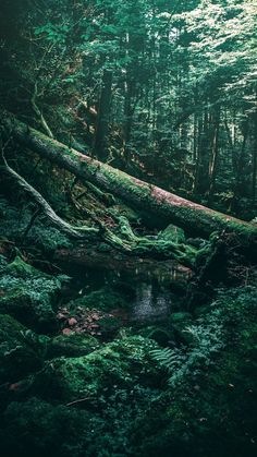 for more HQ green aesthetic wallpapers, color palettes, and inspo click through to our post! Nature Aesthetic, Aesthetic Colors, Aesthetic Photo, Aesthetic Pictures, Forest Wallpaper, Green Wallpaper, Qhd Wallpaper, Green Scenery, Green Pictures