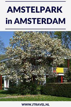 Tijdens mijn wandeling langs de Groene Zuidas in Amsterdam kwam ik o.a. langs en door het schitterende Amstelpark. Bijzonder mooi waren de rododenderons in de Rododendronvallei. Wil je meer lezen over het Amstelpark kijk dan op mijn website. Lees je mee? #amstelpark #amsterdam #rododendronvallei #jtravel #jtravelblog