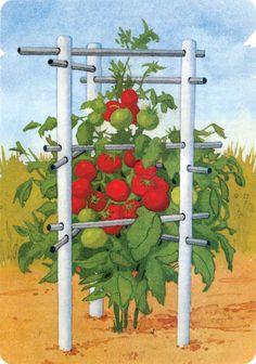 Indestructible Tomato Cage