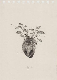 Diagram of a human heart for kids tattoo pinterest human heart anatomical studies drawings ccuart Gallery