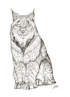 Miss Lynx!  by Sandra Dieckmann