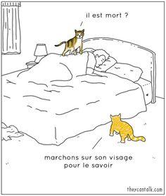 Si les animaux pouvaient parler, voici ce qu'ils diraient !