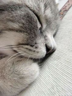 Kitty Love :: Funny Cutest + Most Adorable :: Free your Wild :: See more Kittens + Cats Funny Cats, Funny Animals, Cute Animals, Cute Kittens, Cats And Kittens, Ragdoll Kittens, Tabby Cats, Bengal Cats, Pretty Cats