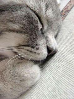 Gute Nacht Süße Katze
