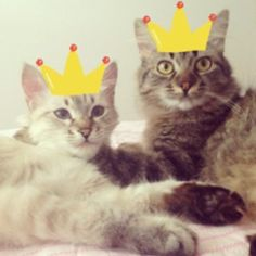 Don't you know? It's #Caturday chill time. yellowhatsforcats.com #chilltime #catflixandchill #saturday #relax #takeiteasy #itstheweekend #kickbackandrelax #happycaturday #cats #catsofinstagram #bestbuds #bestfriends #catfriends #cute #adoptdontshop #animalrescue #catlovers #petlovers #bestmeow #friendsfurever #catsforacause #truelove #animals : @anna__emma__