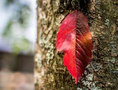 Leaf of autumn