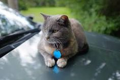 Image result for narrow depth of field photography hd Depth Of Field Photography, Digital, Cats, Animals, Image, Depth Of Field, Fotografia, Gatos, Animales