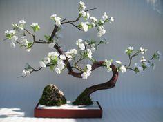 Bonsai Care Plant