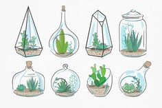 Florarium: succulents & cactuses set by harmonia_green_art on Creative Market - Modern Art Vert, Succulent Tattoo, Plants In Bottles, Succulents Drawing, Bottle Drawing, Purple Succulents, Paludarium, Plant Drawing, Doodle Art