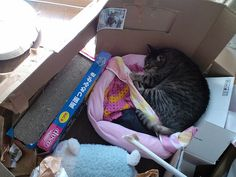 Today's cat on 12th Apr. 2012 by ganchan2, via Flickr