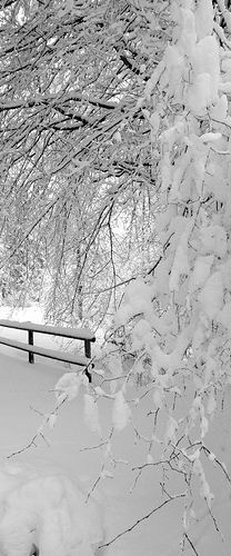Snow layered on fence and trees.