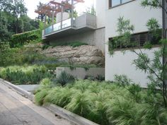 A gorgeous lawn alternative of Mexican feathergrass,  yucca, and other xeric plants in the Dallas area. Redenta Landscape Design