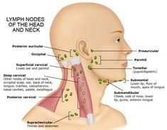 submandibular lymph nodes - Google Search