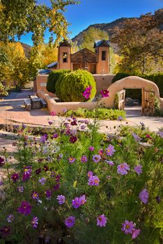 Cosmos grow like crazy in New Mexico and they look so spectacular against all the adobe and red dirt... {Santuario de Chimayo by Dave Shultz}