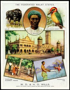 Cigarette Card - Federated Malay States by cigcardpix, via Flickr