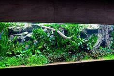 De natuurgetrouwe achterwanden maken de huidige aquaria compleet.
