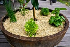 6 New Small Herb Gardens