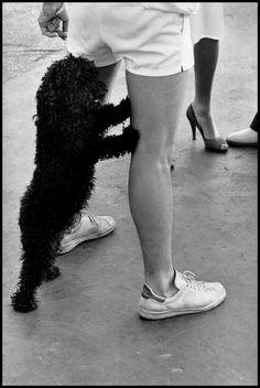 Magnum Photos - Elliott Erwitt, Magnum Photos, Fur Slides, Dogs, Street, Fashion, Moda, Fashion Styles, Pet Dogs