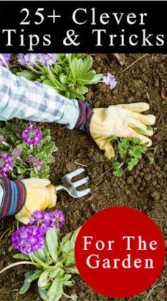 Clever gardening hacks