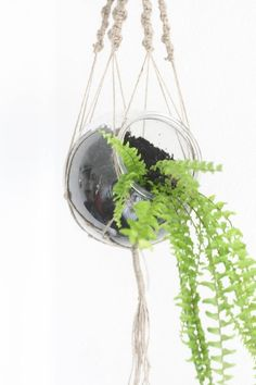 DIY hanging macrame planter Cityscape Bliss // Creative Home
