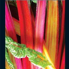 Swiss Chard -- Baker Creek Seeds rareseeds.com